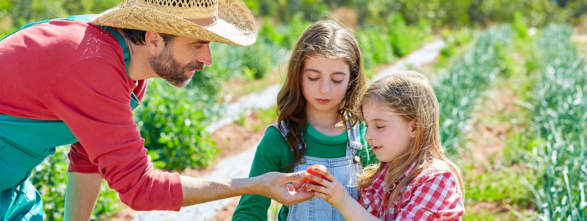 Farmer hands a tomato to a girl and her sister
